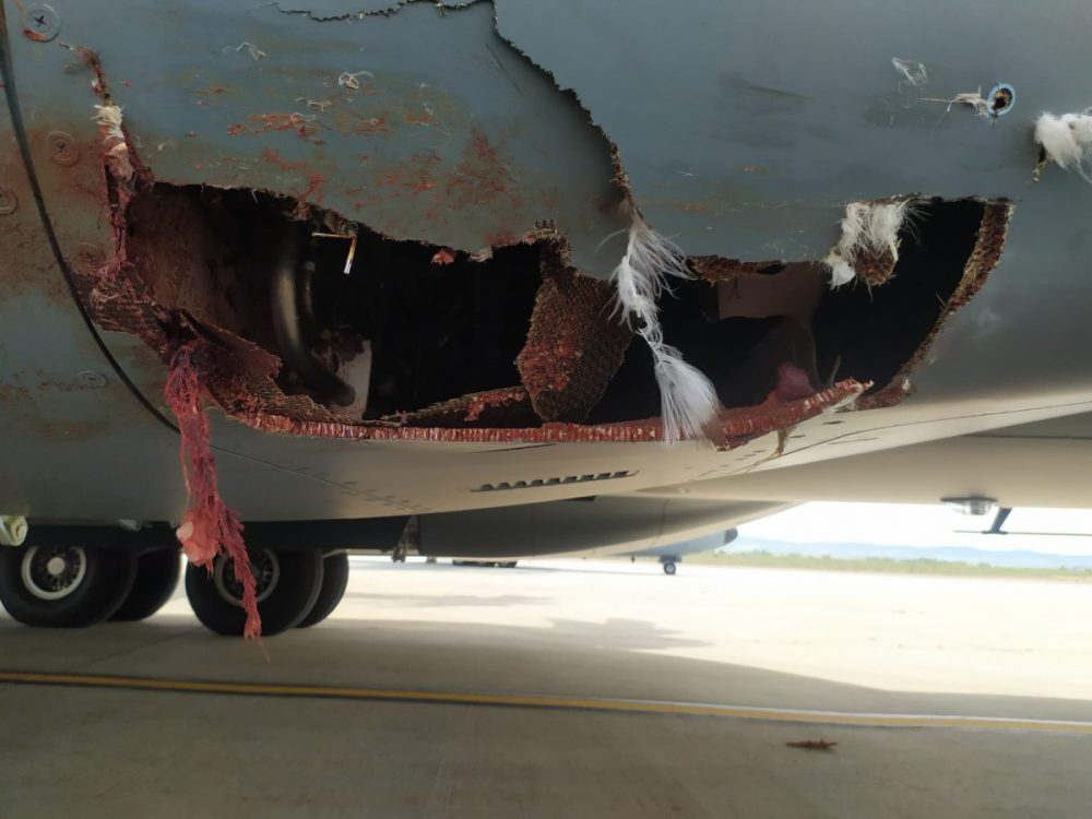 A400M robek karena burung